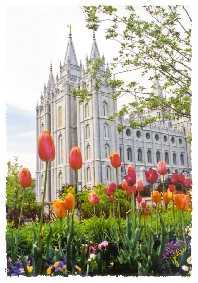 TESL46b-0403 (D-122) Tulips.cds