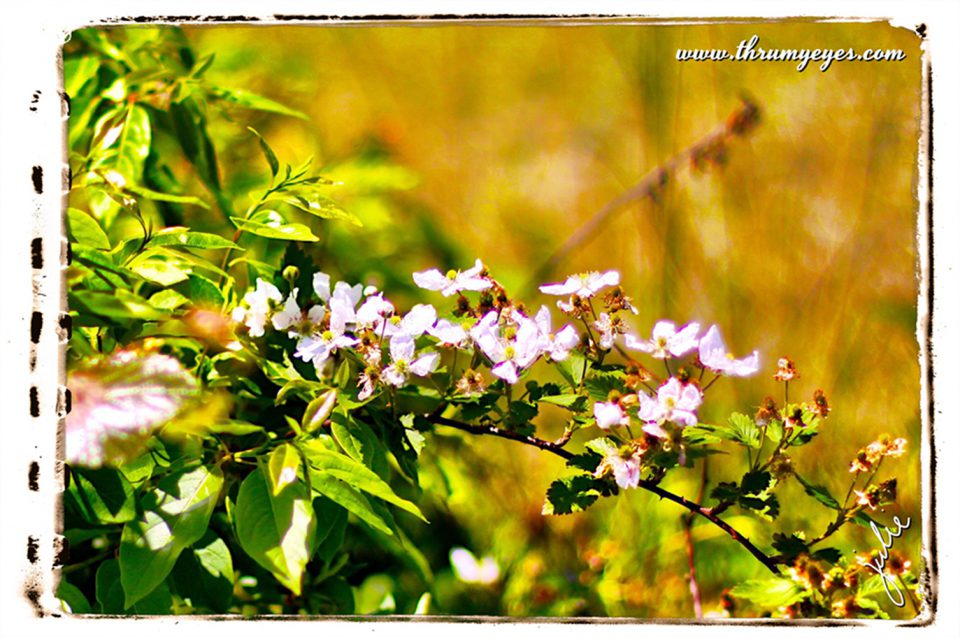 IMG_1176a